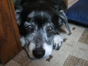 Here is my adorable dog, Tillie. We have never stayed up to hear her talk on Christmas Eve.