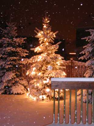 christmas-tree-1443992-1279x1705